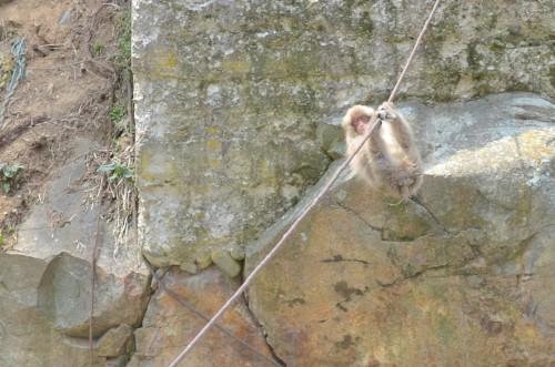 pasa por cuerda
